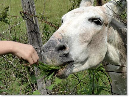 Cranky Old Mule