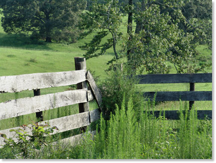 Old Country Fence
