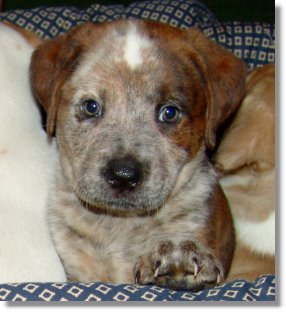 My favorite picture of Hoochie shortly before she was adopted out to a good and loving family!