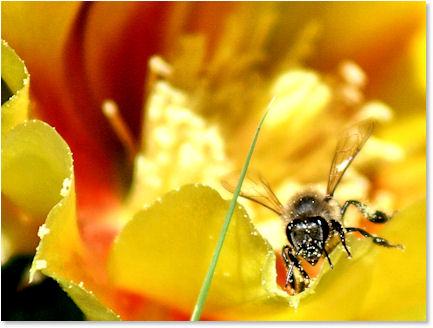Messy Pollinator