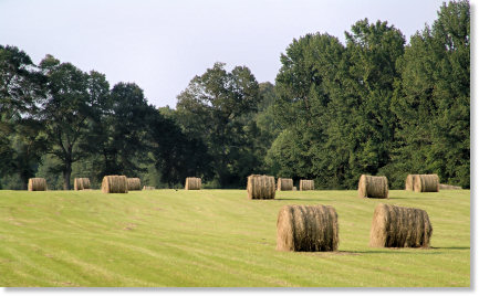 Mississippi Hay Field