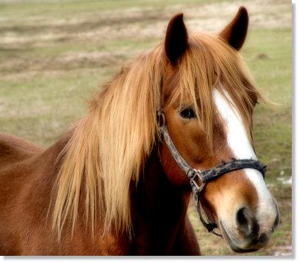 Horse Glamour Shot